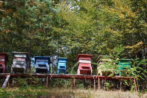 Пчелините в горите ще се разрешават от шефовете на държавните предприятия