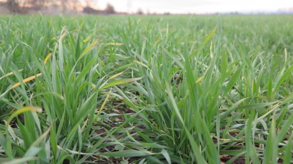 Франция е увеличила площите с есенна пшеница с над 15 на сто