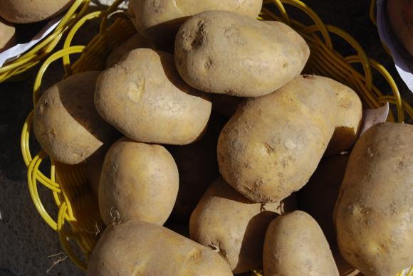 От 9 март до 14 май е приемът на заявления за препарати срещу вредители по картофите