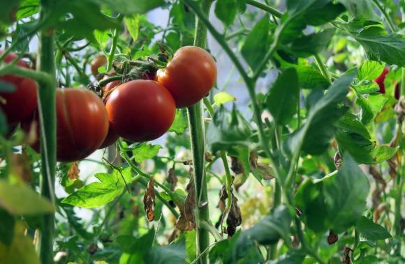 Документите по обвързаната подкрепа за плодове, зеленчуци и по схемата за млади фермери през 2021 г.