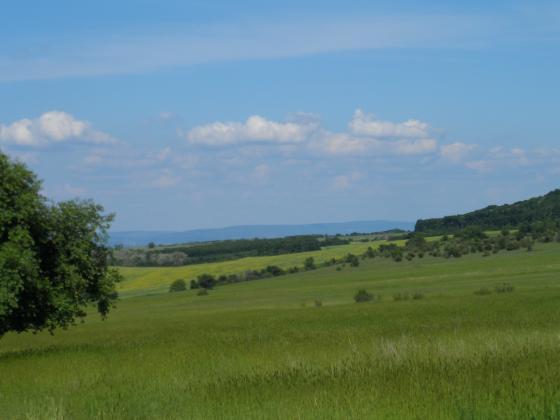Намаляват земите със селскостопанско предназначение в Германия