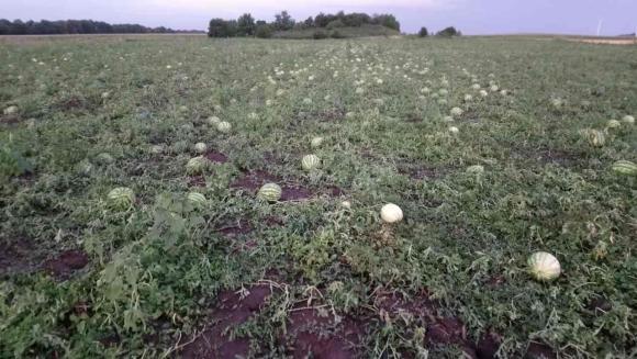 От 15 март ДФЗ приема заявления за съфинансиране на застраховки на селскостопанска продукция