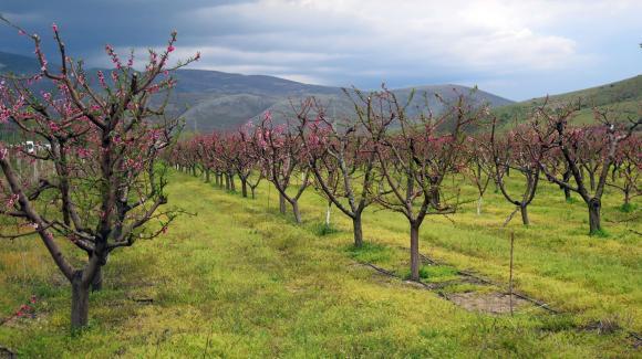 Доста дъждовен април, но почти без минусови нощни температури