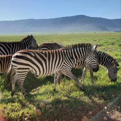 Слагат ушни марки и на животните в циркове и увеселителни паркове