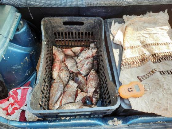 Предотвратиха продажба без документи на сребриста каракуда във Варненско