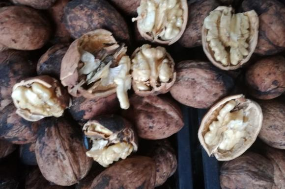 Резитба за плододаване при ореха
