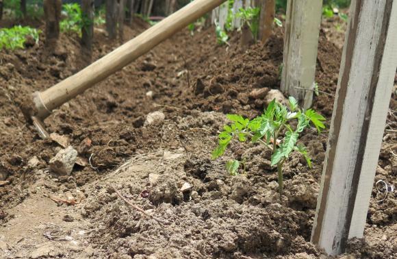 Инспекцията по труда увеличава проверките в земеделието