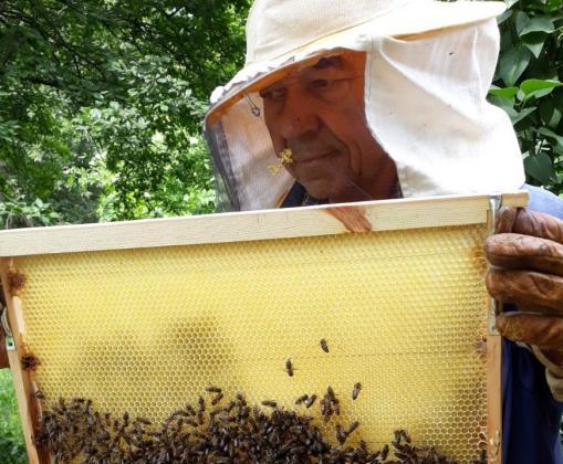 Основната вина за смъртността на пчелите се стоварва върху стопаните