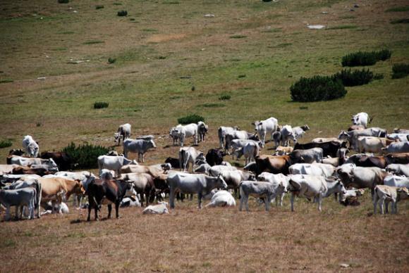 Намалява броят на земеделските стопанства и продължава окрупняването им в България