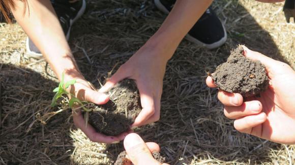 Аграрно предприемачество – състояние и общи перспективи за развитие