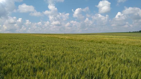 Ден на пшеницата 2021 ще се проведе в Разград