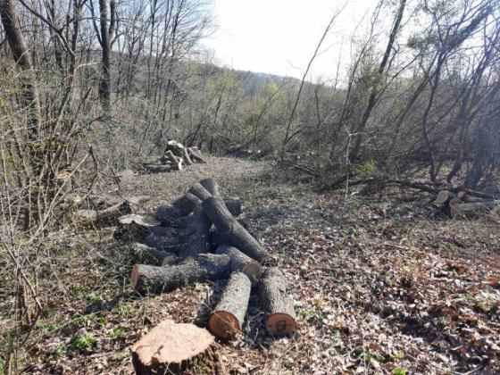 Ограничават планирането и провеждането на сечи край водоемите