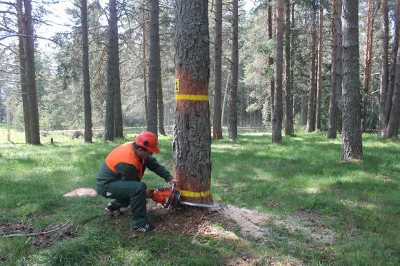 Орязват заплатите на шефовете и бордовете на горските предприятия