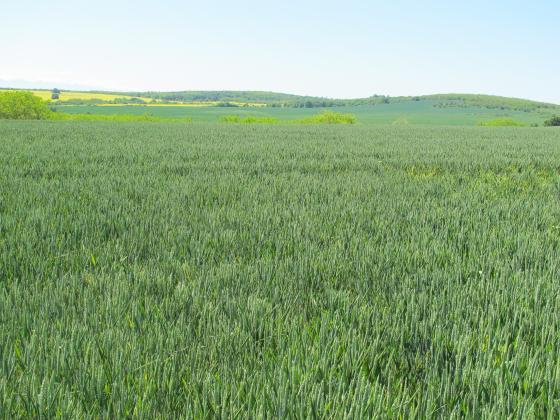 """Костадинов: Скъпите суровини ще """"стопят"""" приходите от добрата цена при зърното"""