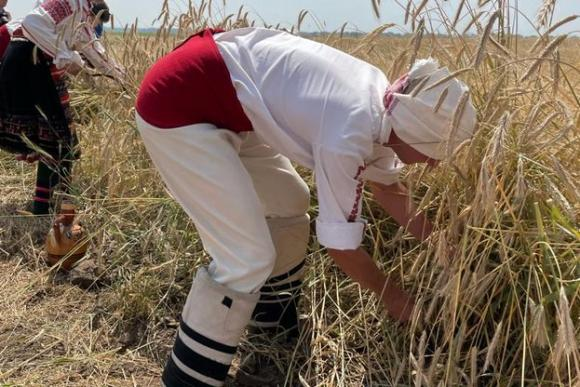 Бозуков очаква реколтата от пшеница да остане под 6 милиона тона