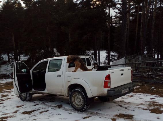 В Разложко задържаха натоварен с незаконна дървесина джип на бракониер рецидивист