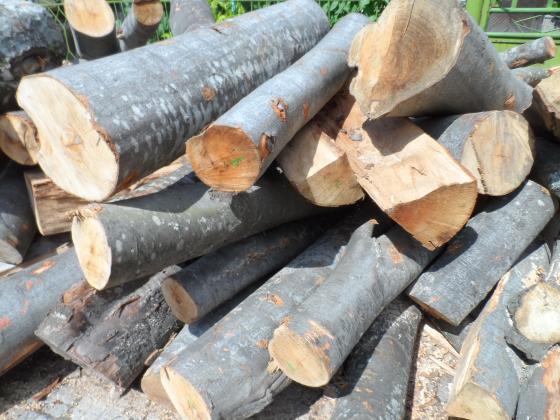 Стражари задържаха втори автомобил с незаконна дървесина в Разложко