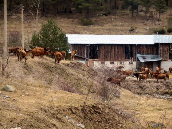 Проверките в животновъдните обекти за Кампания 2021 ще се извършват само до 10 часа