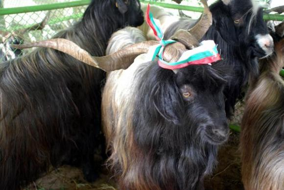 "Фонд ""Земеделие"" отпусна бюджет за изложението на автохтонните породи в Калофер"