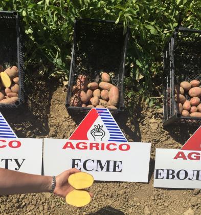 Брекзит доведе до недостиг на посадъчен материал картофи в Обединеното кралство