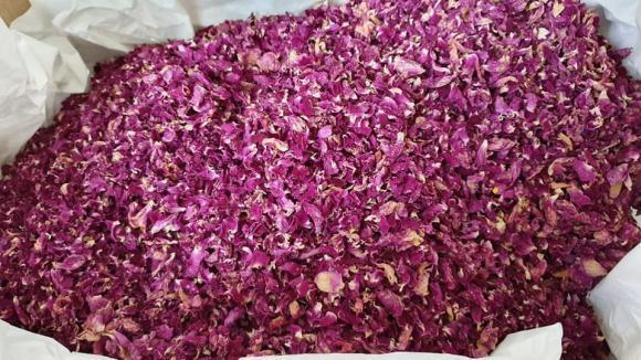Преведоха над 444 000 лева на 11 прерабоботватели на розов цвят
