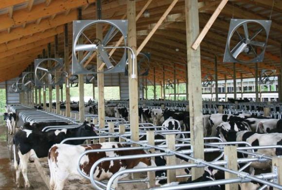 На границата продължават нарушенията при износ на животни от ЕС за трети страни